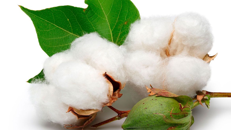МОТ призвала инвесторов помочь развитию текстильной индустрии Узбекистана вместо бойкота хлопка